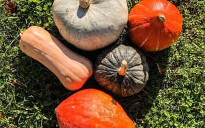 10 produits 100% Occitanie à savourer cet automne